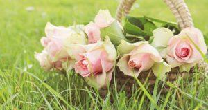 fiori di bach - chiara mattea